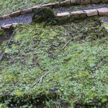 Grave 16 - Unknown | Roger Harrison