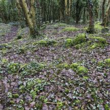 Grave 4 - Unknown plot | Roger Harrison