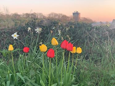 Annaghdown Castle in the background  | Irene McGoldrick