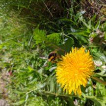 Athenry Garden Safari Photos   R Joyce
