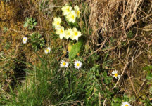 Ballyara Blossoms