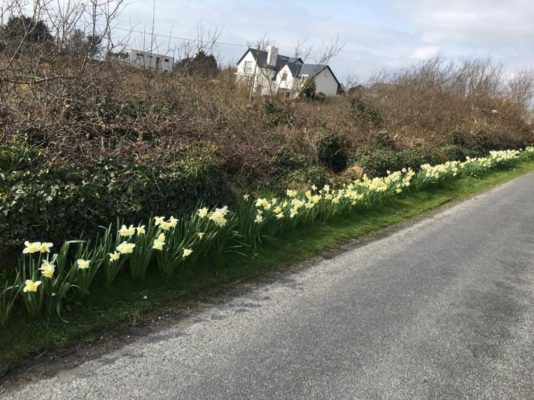 Spring time  | Eileen Ruane