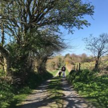 The big walk   Sara Slattery