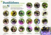 Biodiversity and Pollinator Resources