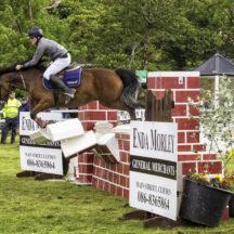 Connamara Ponies | Roger Harrison