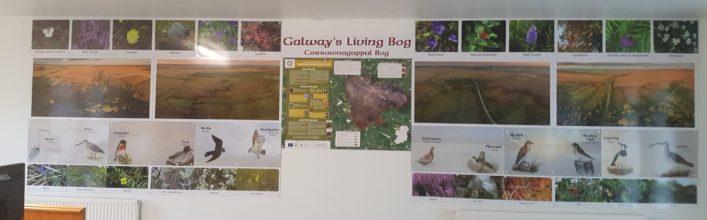 Carrownagappul Bog   Galway Telework