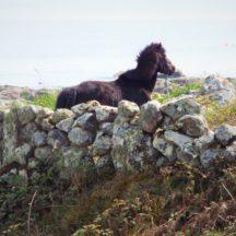 Pictiúirí as Indreabhán | Máirtín Davy