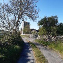 Killeen Castle laneway | Marie Boran