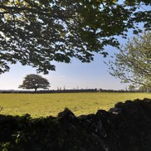 Killeen Cemetery Sycamore trees | Marie Boran