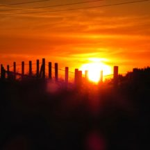 Sunset | Michelle Mitchell