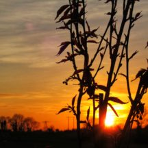 Sun setting in Kiltullagh | Michelle Mitchell