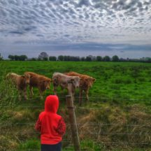 Watching the cows | Marian Mitchell