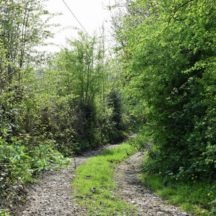 Walk in the woods   Marian Hardiman