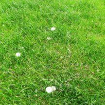 Mushroom season | Michelle Mitchell