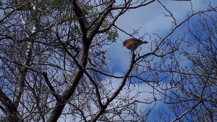 Robin in Clonbur | Noreen Moughty