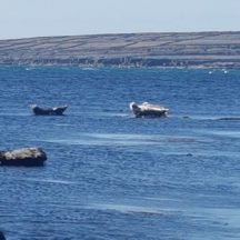Seals off the Inis Oírr coast  | Paddy Crowe