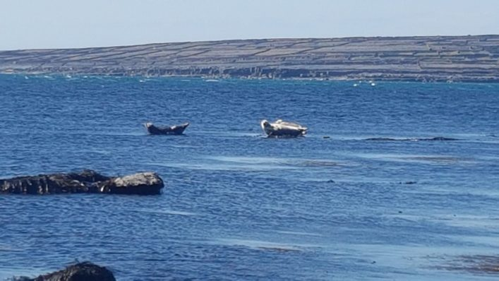 Seals off the Inis Oírr coast    Paddy Crowe