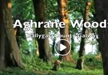 Aghrane Woods in Ballygar