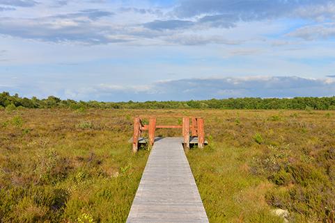 Bog Walk | Robert Riddell
