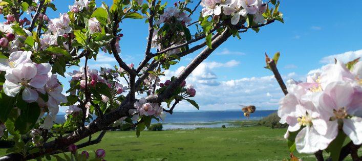 Cherry Blossom | Bride Brady