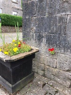 Flowers | Geraldine Morrin