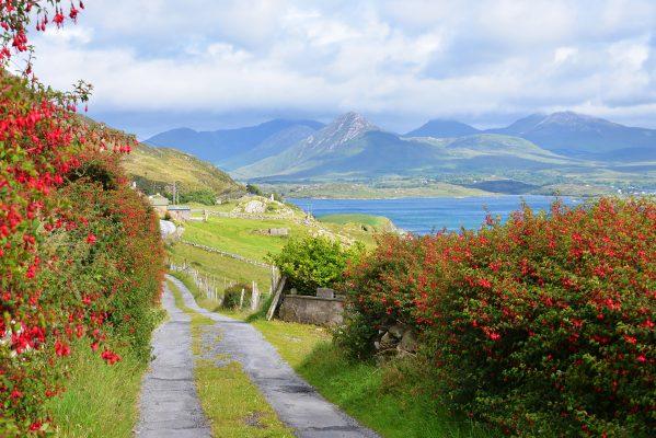 Connemara Laneway Letter More Derryinver | Robert Riddell
