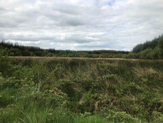 Field in Corlackan | Carmel O'Rourke