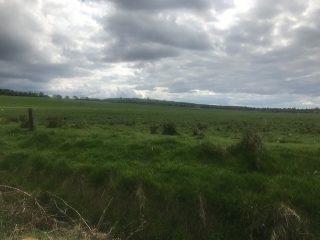 Field in Cuilnacappy | Carmel O'Rourke