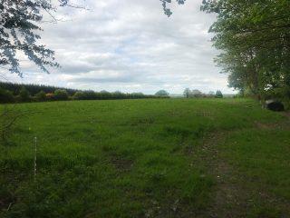 Field in Curraghrevagh | Carmel O'Rourke