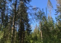 Monivea Woods