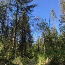 Monivea Woods | Marka Gilhooley