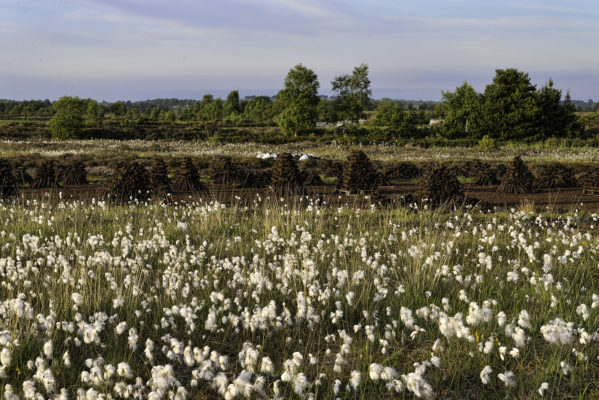 Bog cotton and Pollboy bog | Robert Riddell