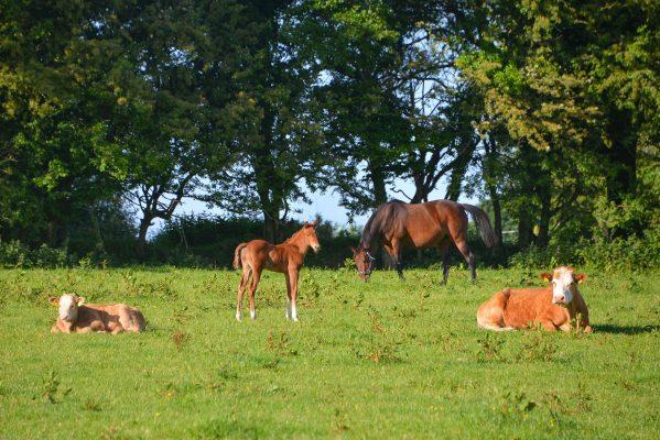 Social Distancing Mackney Ballinasloe | Robert Riddell
