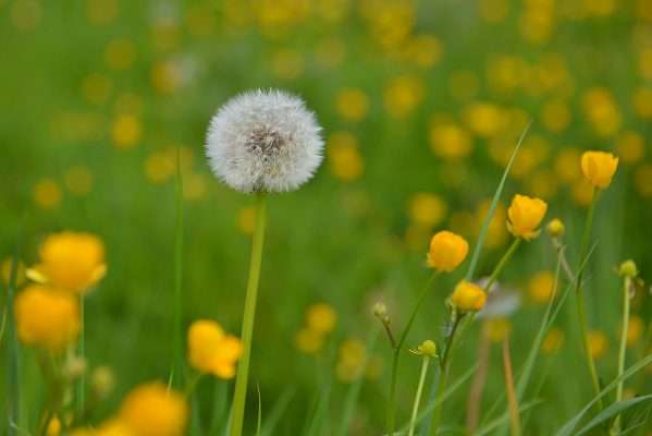 Summer Meadow, Ballinasloe | Robert Riddell