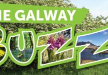 The Galway Buzz!