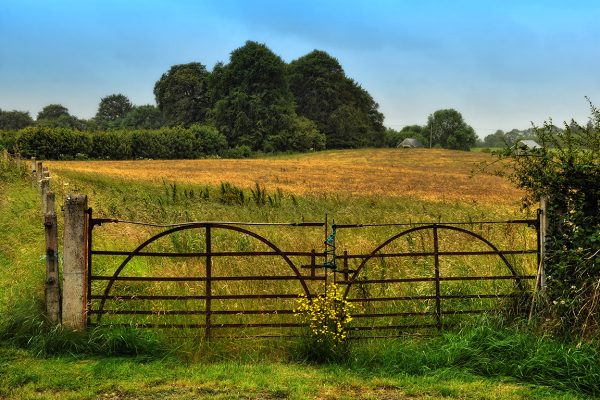 The Meadow Gate | Robert Riddell