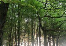 Woodlawn Woods