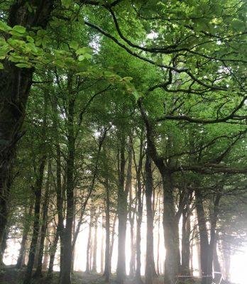 Woodlawn Woods   Gráinne O' Byrne