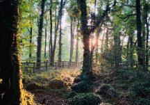 Clarinbridge Forest Trail
