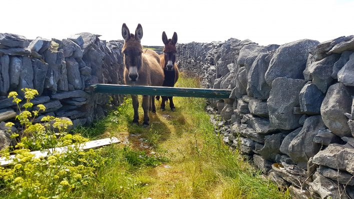 Donkeys   Mary Doherty