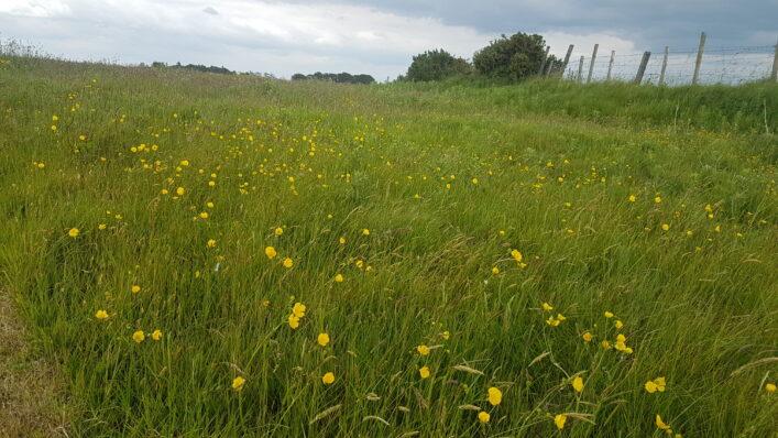 Meadow   Anne Mannion