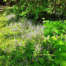 Wildflowers in Mountbellew Woods | Jimmy Noone