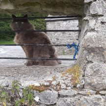 Purdy our cat looking into the walled garden | Geraldine Noone