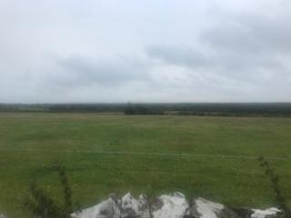 Field in Park | Carmel O'Rourke