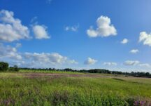 Field full of Wildflowers