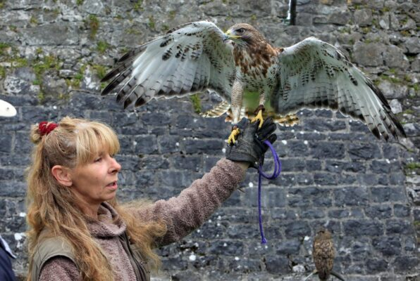 Rosie Campbell of Animal Magic wild life sanctuary displaying a Ferrutail Hawk in Athenry, Co. Galway as part of Athenry Walled Towns Day celebration. | Picture: Hany Marzouk
