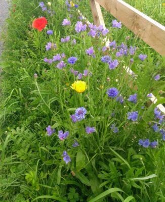 Pollinator Zone | Clare Doyle