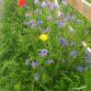 Pollinator Zone