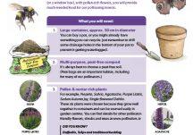Pots for Pollinators