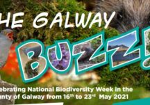 The Galway Buzz Brochure
